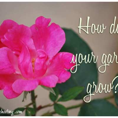 Tips to Suburban Gardening…From Someone Who's Done it All Wrong