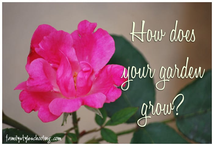 How does your garden grow rose