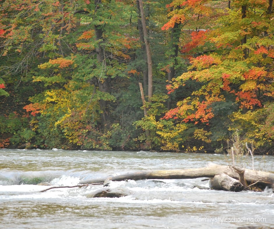 Niagara falls state park (11)