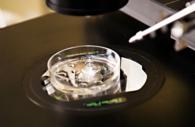 Three-Parent In Vitro Fertilization (IVF)