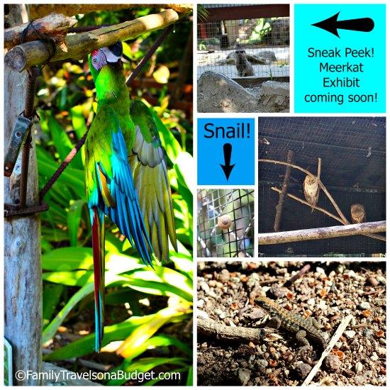 Ardastra Gardens wildlife