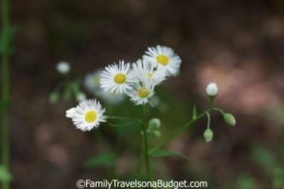Wildflowers, Red Mountain Park, Birmingham, AL