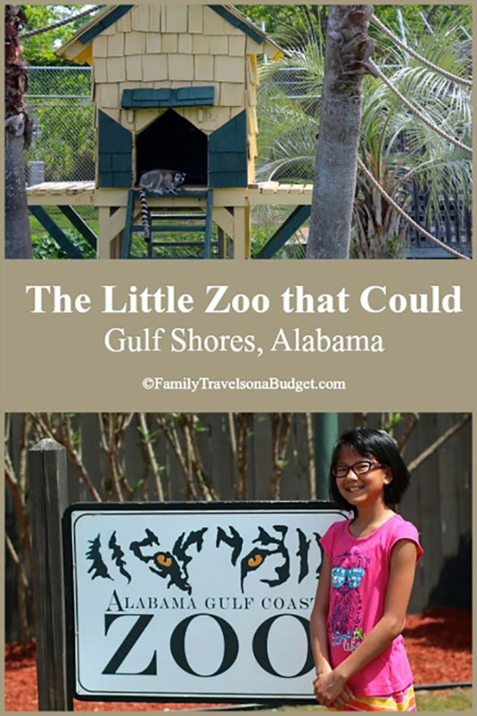 The Little Zoo that Could