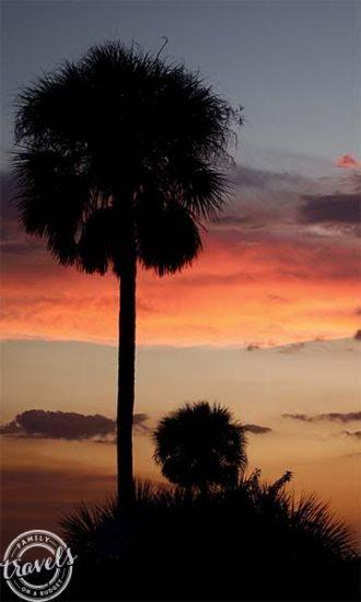 Palm trees at Siesta Beach