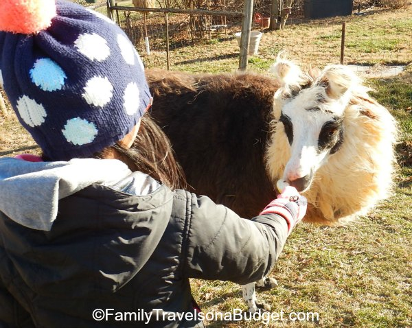 Wish I had a llama coat!