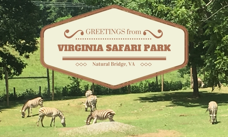 Virginia Safari Park: 5 star fun!