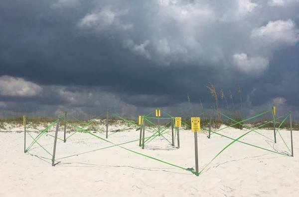Sea turtle nests are clearly marked