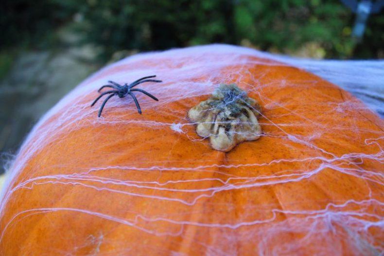 Pumpkins in Kent Halloween
