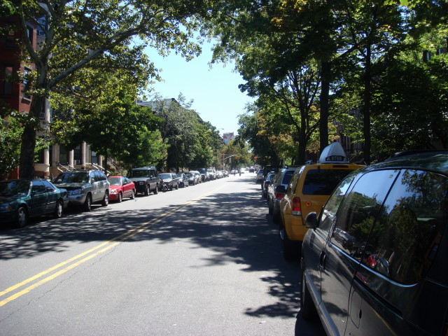 Park Slope trees 1