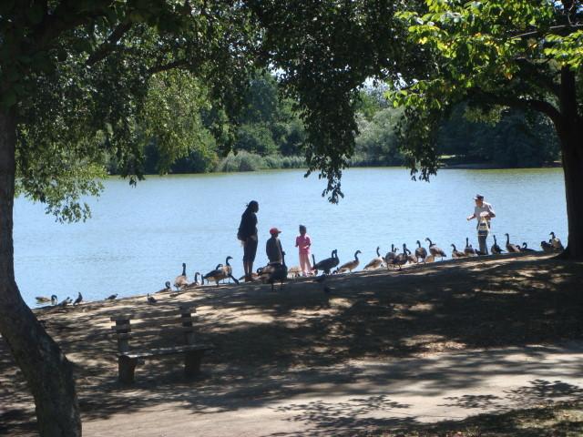 Prospect Park Lake1