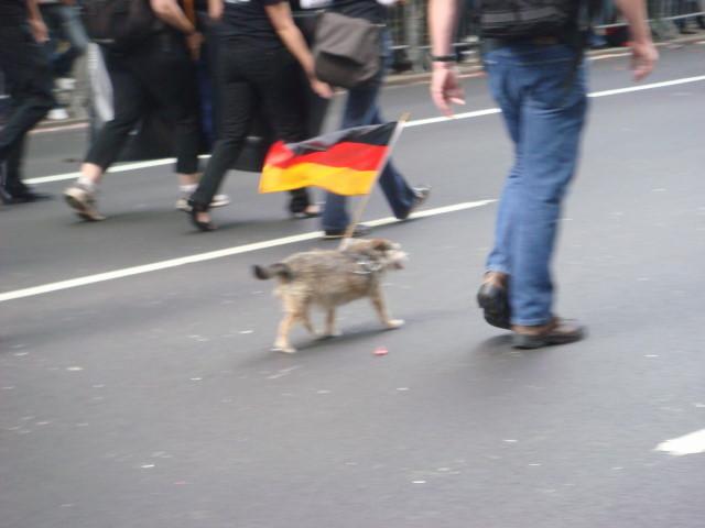 20070915-steuben-parade-39-german-flag-dog.jpg