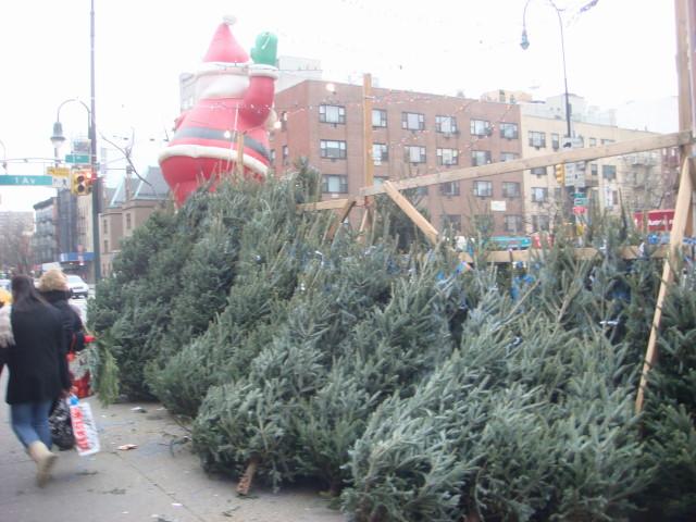 071209-14th-street-christmas-trees-02.jpg