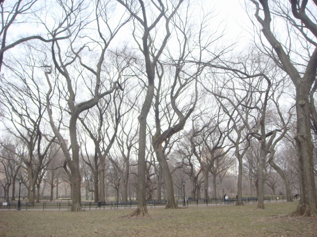 20080126-central-park-in-winter-03.jpg
