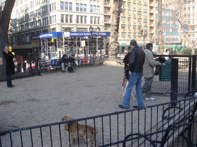 20080203-union-square-dog-run-02.jpg