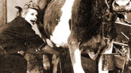 I Love Lucy - during Lucy's Bicycle Trip, Lucy milks a cow
