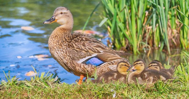 Think Like a Mother