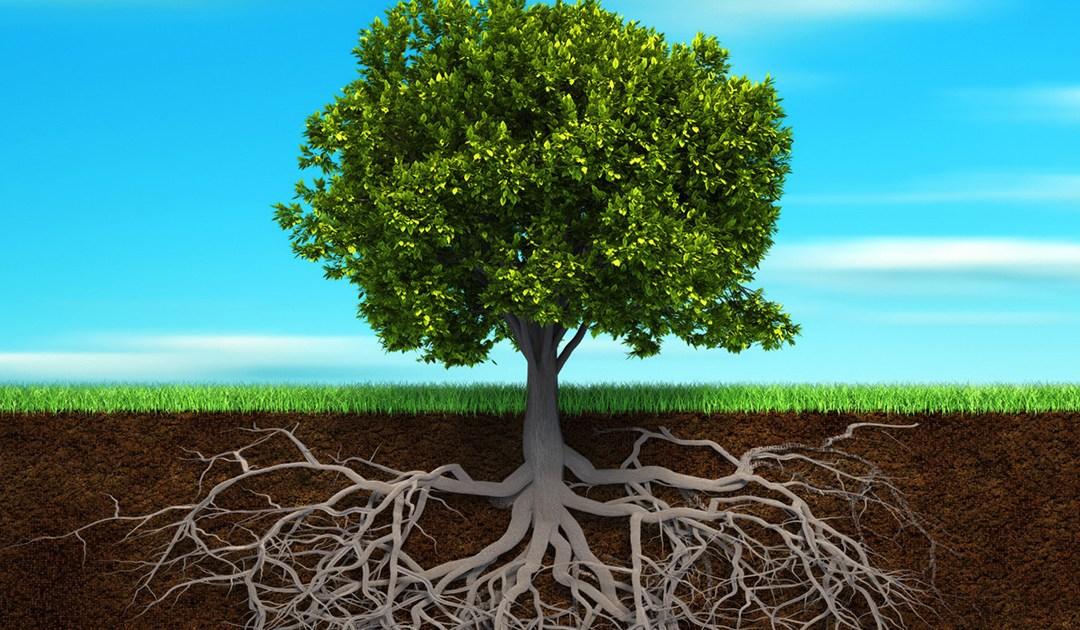 Familia Vicenciana: un árbol que fructifica y florece