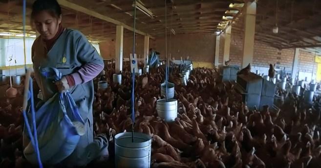 La granja «San Vicente de Paúl», proyecto de emprendimiento social en Bolivia