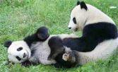 captpandaaustria_zoo_ls101