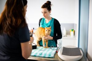 soins animaux lorient