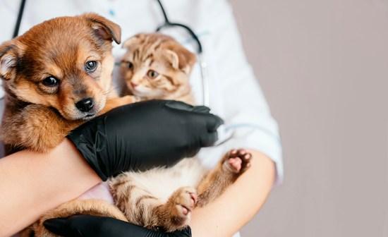 Famylia, pet sitter à Quimperlé