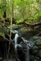 cascade, Saha Forest Camp Anjozorobe-Angavo