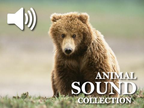 Animals Cute Sound Board HD iPad App Review