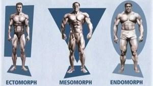 ectomorfo mesomorfo endomorfo