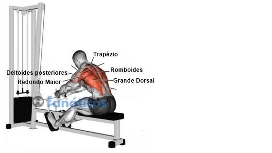 Qual músculo trabalha a remada sentada