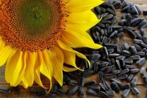 Alimentos que contém proteínas - Semente de Girassol