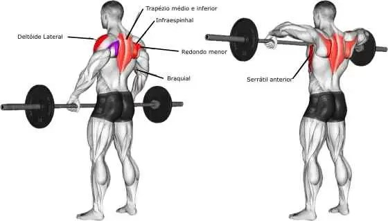 remada alta músculos trabalhados