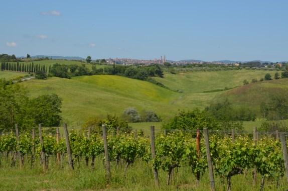 View of Siena across vineyards