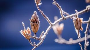 Winter-32
