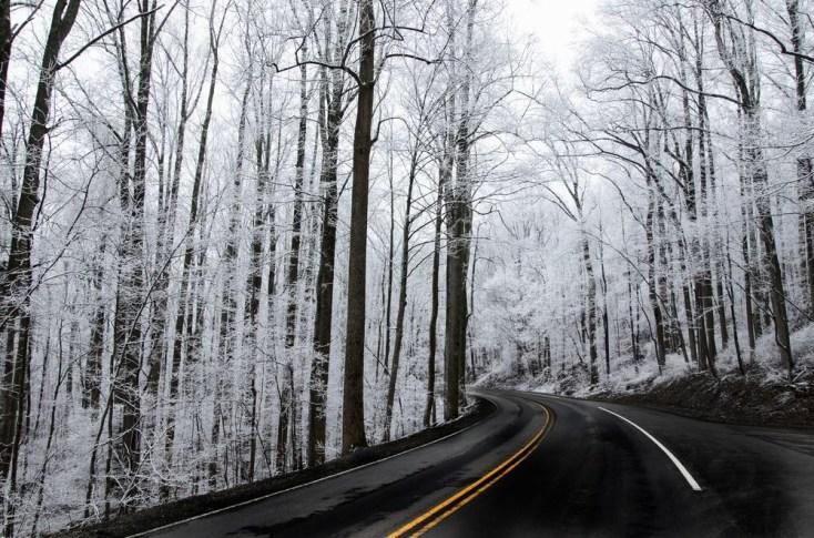 Winter-81
