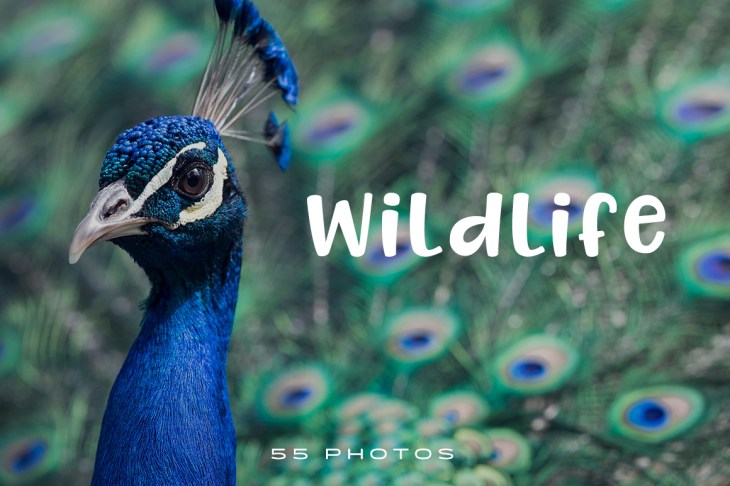 Wildlife-Photo-Pack