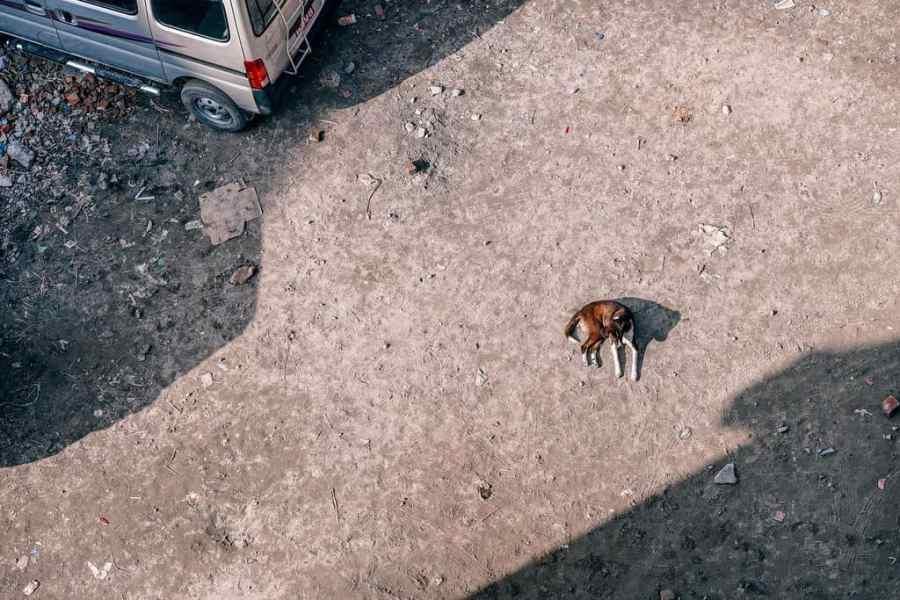 Cute dog enjoying the sunny weather in Kathmandu, Nepal.