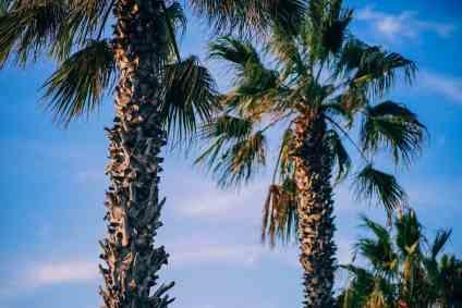 Sunset-Palms