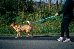 5 Best Gadgets and Products for Your Pets