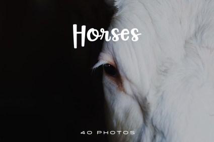 Horses-Photo-Pack