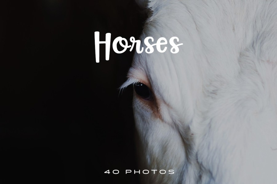 Horses-Photo-Pack-1024x681
