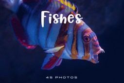 Fishes-Photo-Pack