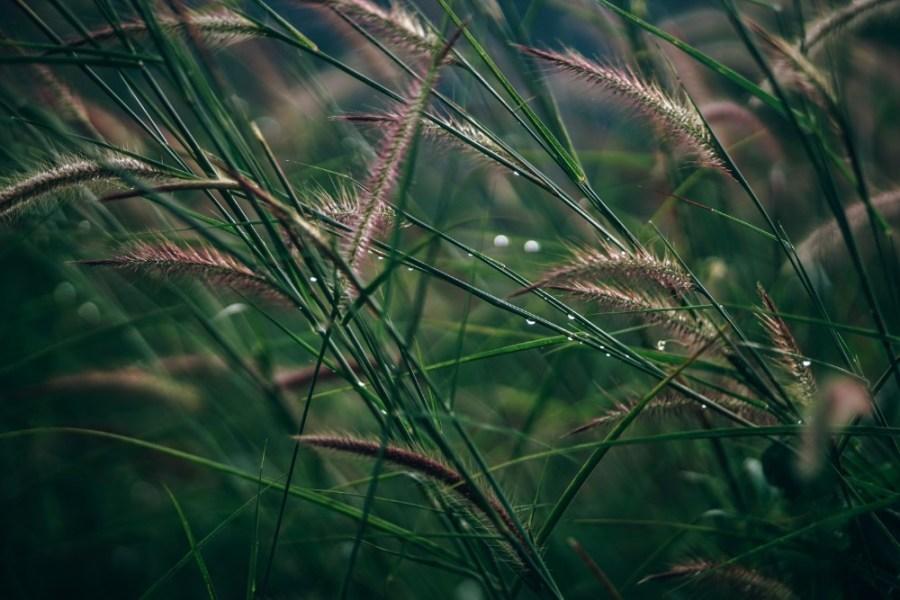 Beautiful-Grassland-in-Cambodia-after-the-Rain