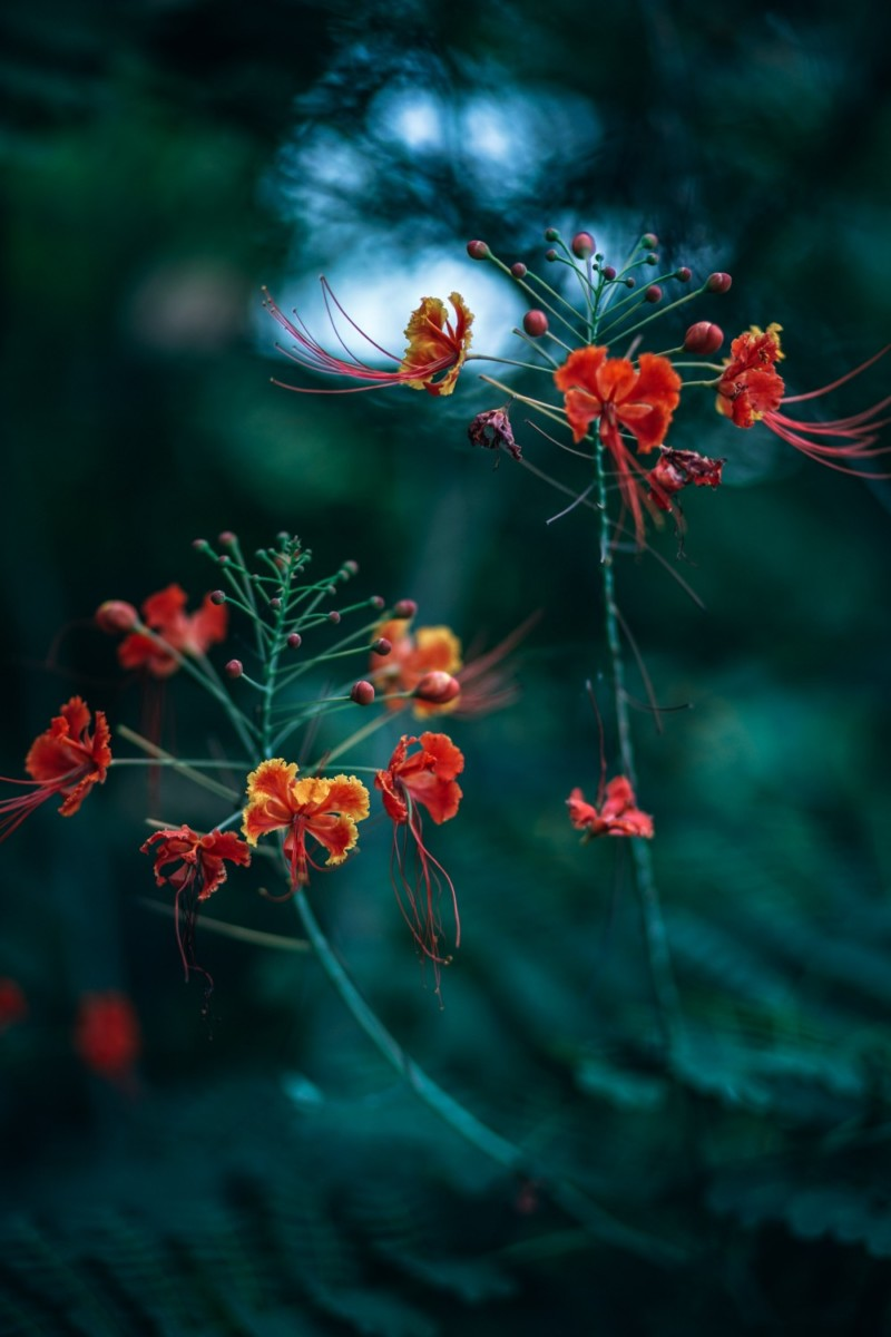 Beautiful-Red-Flowers-at-the-Butterfly-Garden-in-Kep-National-Park