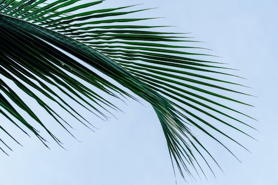 Cool-Palm-Tree-Leaves-and-the-Sky-in-the-Background