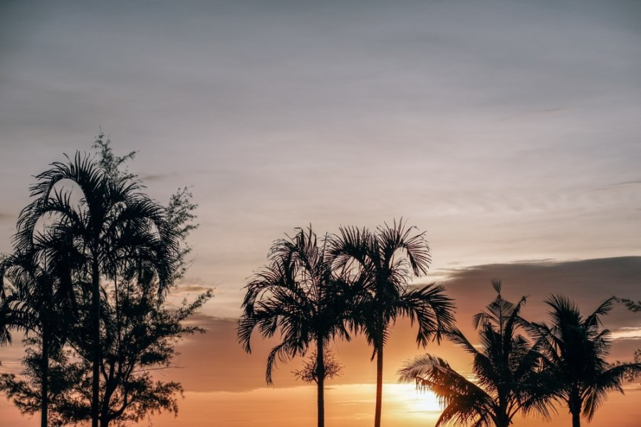 Sunset-Photography-Taken-Behind-Palm-Trees