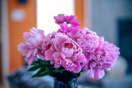 Stunning-Pink-Carnation-Flowers-inside-a-Home