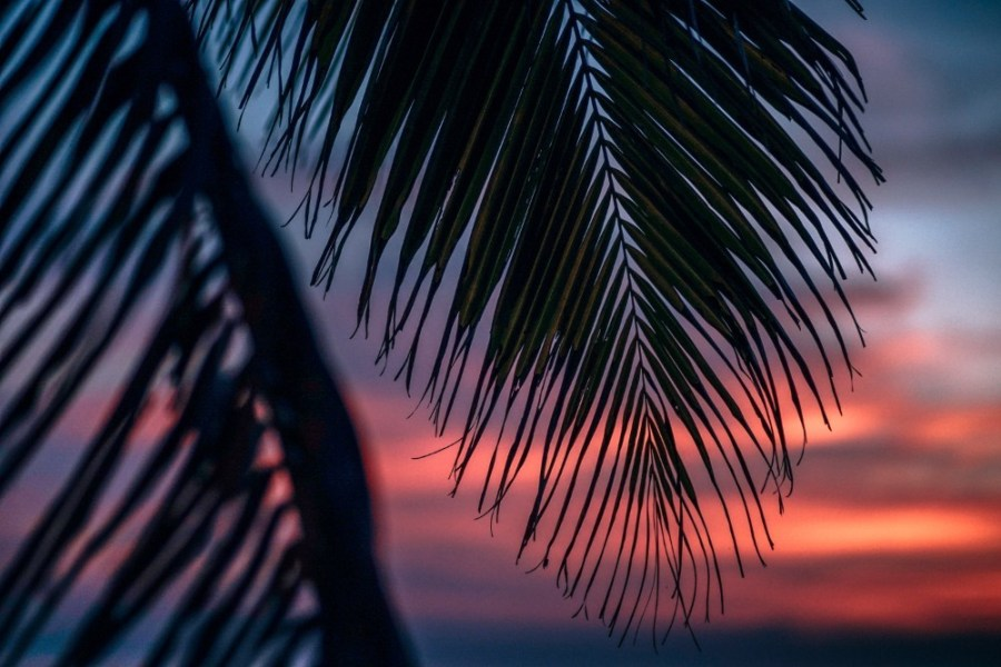Tropical-Branch