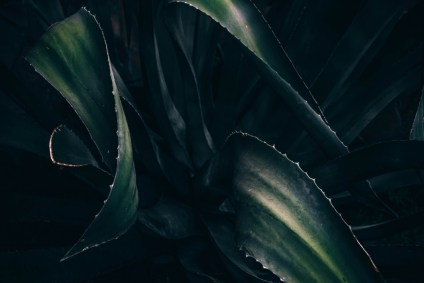 Close-up-Shot-of-Dark-Green-Leaves