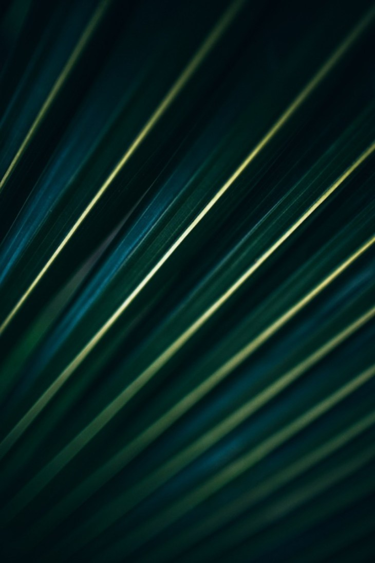 Close-up-Shot-of-a-Dark-Green-Tropical-Leaf