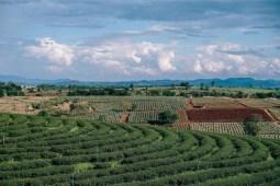 Aerial-View-of-a-Beautiful-Tea-Plantation